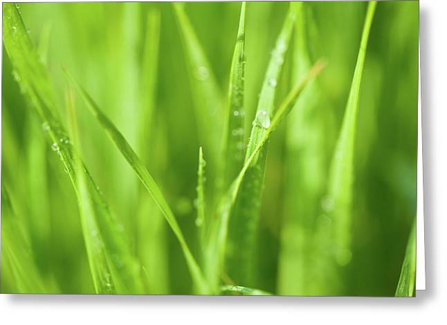 Dew Greeting Cards - Native Prairie Grasses Greeting Card by Steve Gadomski