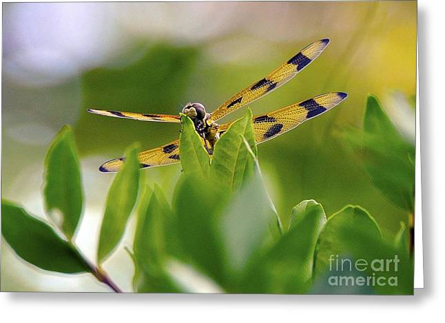 Tropical Greeting Cards - Nature and Wildlife Series Greeting Card by Terry Troupe