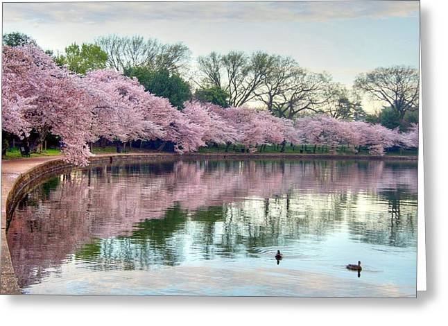 Cherry Blossoms Photographs Greeting Cards - Nature Heals Greeting Card by Mitch Cat