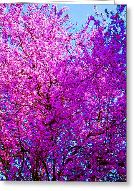 Pink And Purple Flowers Greeting Cards - Nature in Bloom Greeting Card by Nick Gustafson