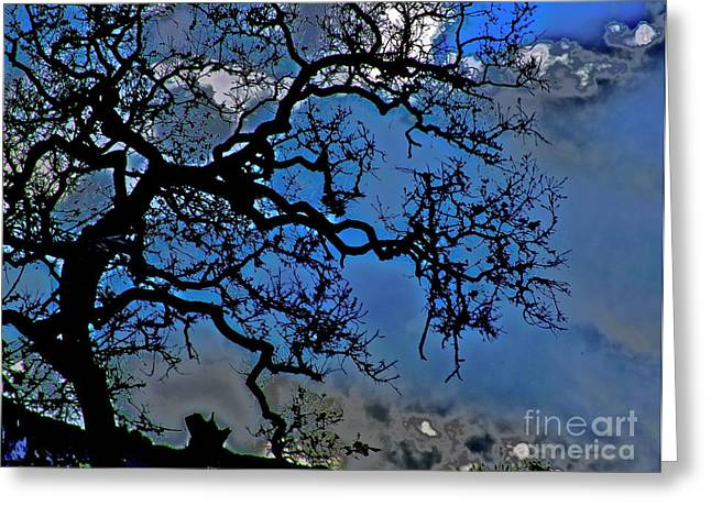 Gnarly Greeting Cards - Nature Is Ancient Greeting Card by Xn Tyler
