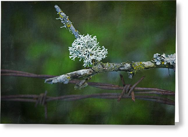 Lichen Photo Greeting Cards - Nature Meets Barbed Wire Greeting Card by Bonnie Bruno