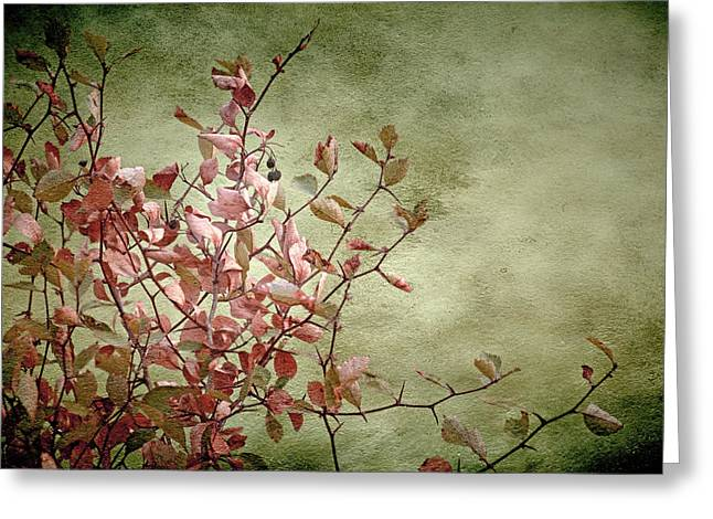 Salmon Mixed Media Greeting Cards - Nature on Parade Greeting Card by Bonnie Bruno