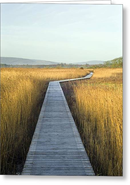 Reed Bed Greeting Cards - Nature Reserve Boardwalk Greeting Card by Duncan Shaw