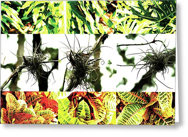 Fort Meyers Greeting Cards - Nature Scape 007 Greeting Card by Robert Glover