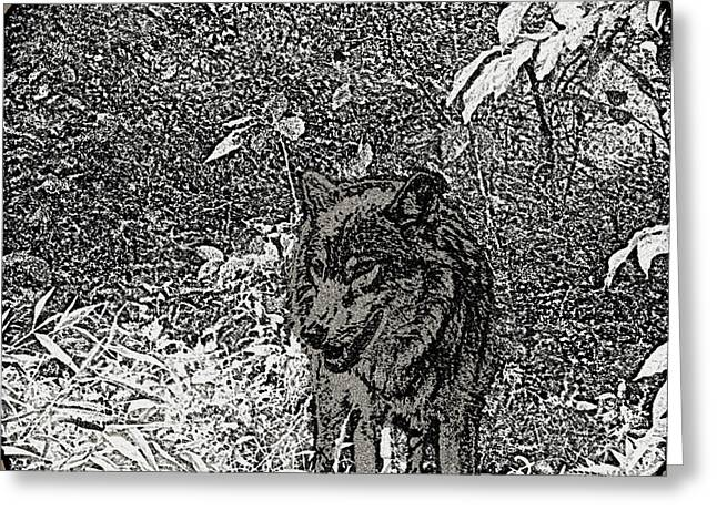 NATURE WALK WOLF Greeting Card by Debra     Vatalaro