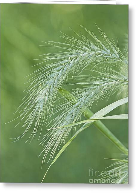 Nature Photograph Greeting Cards - Natures Abstract 1 Greeting Card by Michael Cummings