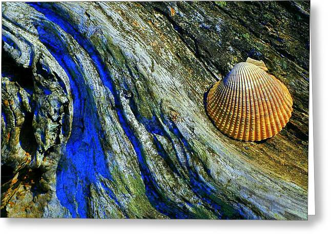 Shell Texture Greeting Cards - Natures Abstract Greeting Card by Lori Seaman