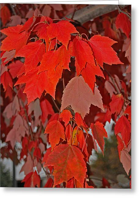 Randall Templeton Greeting Cards - Natures beauty. Greeting Card by Randall Templeton