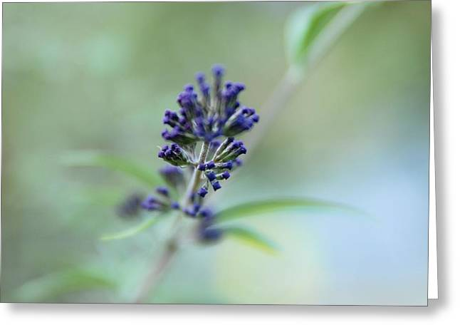 Natures Brush Greeting Card by