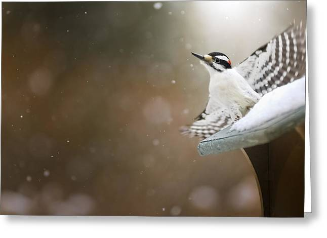 Nature Greeting Cards - Natures Flight Greeting Card by Frank Iusi