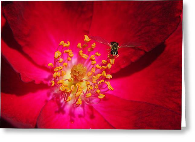 Yellow Jacket Greeting Cards - Natures Glow Greeting Card by Frozen in Time Fine Art Photography
