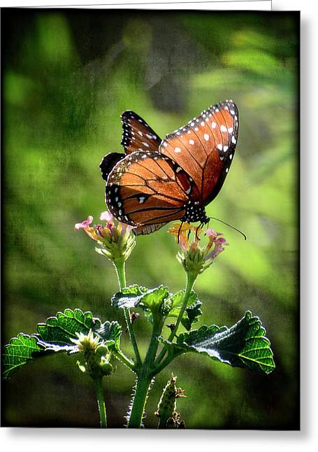 Queen Butterfly Greeting Cards - Natures Harmony  Greeting Card by Saija  Lehtonen