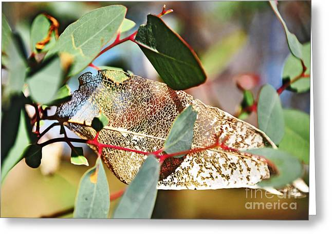 Nature's Lace Greeting Card by Kaye Menner
