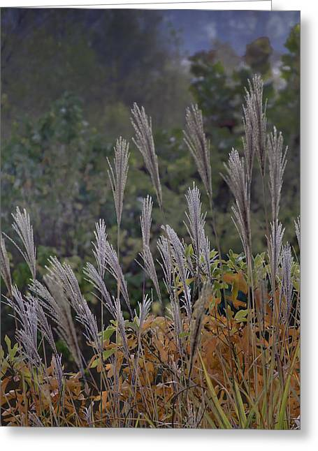 Fall Scenes Greeting Cards - Natures Layers Greeting Card by Rob Travis
