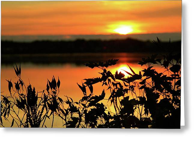 Nature's Paintbrush Greeting Card by Mike Stouffer