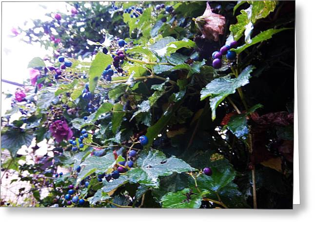 Bunch Of Grapes Greeting Cards - Natures Palette Greeting Card by Gordon Wendling