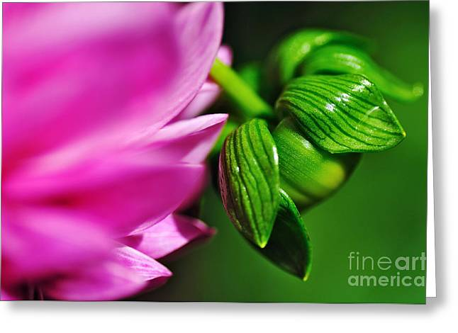 Flowers On Line Greeting Cards - Natures Perfection Greeting Card by Kaye Menner