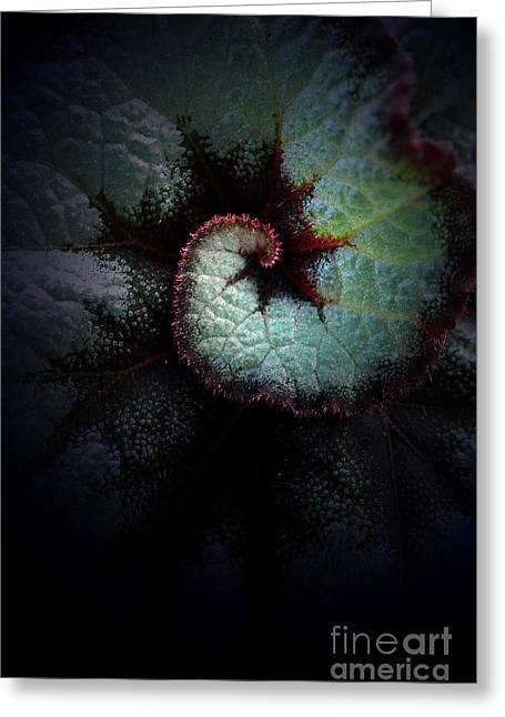 Mike Nellums Greeting Cards - Natures Rex begonia Greeting Card by Mike Nellums