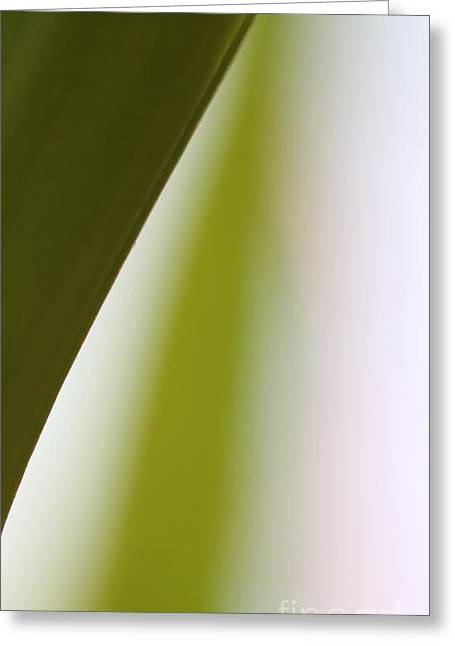 Cheap Abstract Art Greeting Cards - Natures Swerve Greeting Card by Amanda Barcon