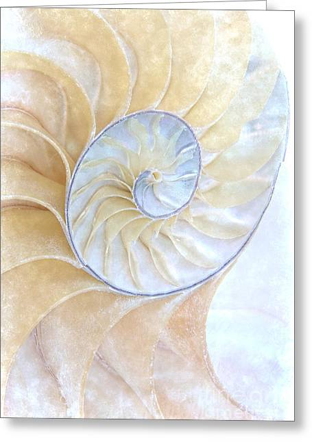 Marine Creatures Greeting Cards - Nautilus Frost Greeting Card by Ann Garrett