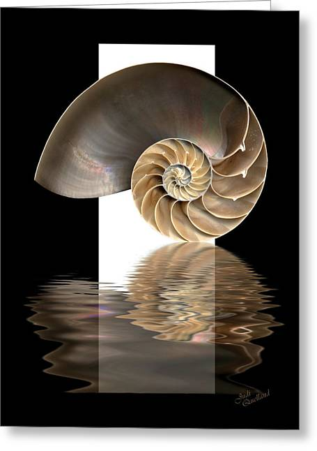 Ocean. Reflection Greeting Cards - Nautilus Shell Greeting Card by Judi Quelland