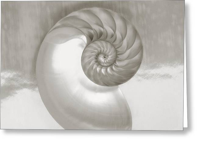 Aquatic Greeting Cards - Nautilus Spiral Greeting Card by Kate Turning & Tom Gibson - Printscapes
