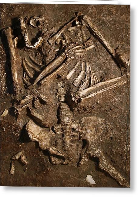 Most Photographs Greeting Cards - Neanderthal Skeleton, Kebara Cave, Israel Greeting Card by Javier Truebamsf