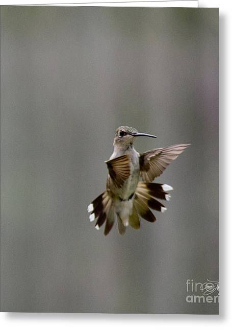 Nectar Defense Greeting Card by Cris Hayes