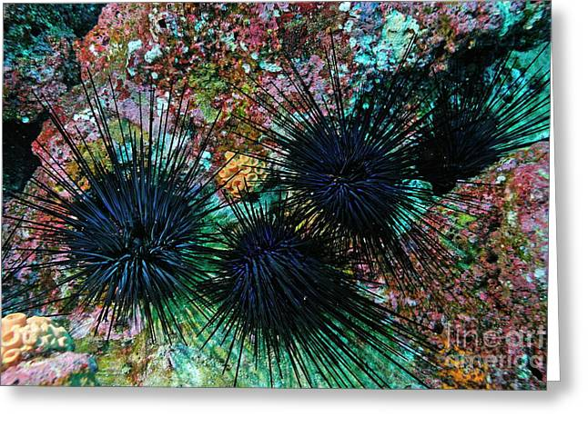 Undersea Photography Greeting Cards - Needle Sea Urchin Greeting Card by Sami Sarkis