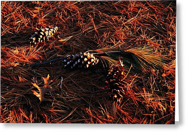 Pine Cones Greeting Cards - Needles Cones and Oak Leaf Greeting Card by Larry Ricker