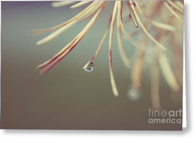 Graceful Tree Greeting Cards - Neigerelle - 06b Greeting Card by Variance Collections