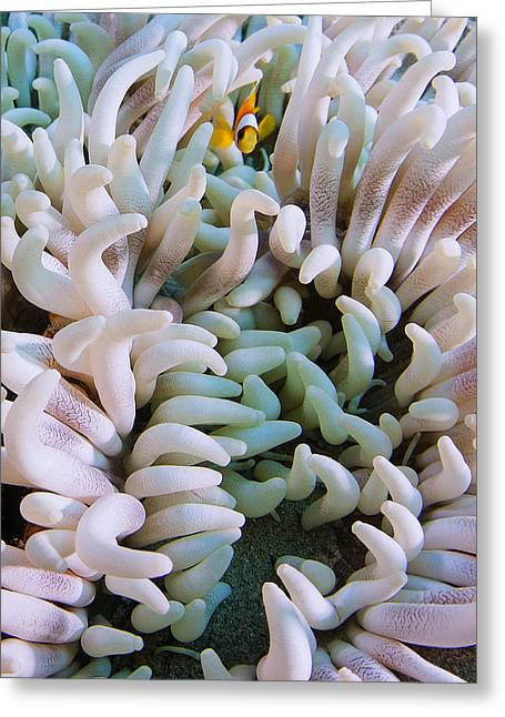 Nemo Greeting Cards - Nemo Greeting Card by Rico Besserdich