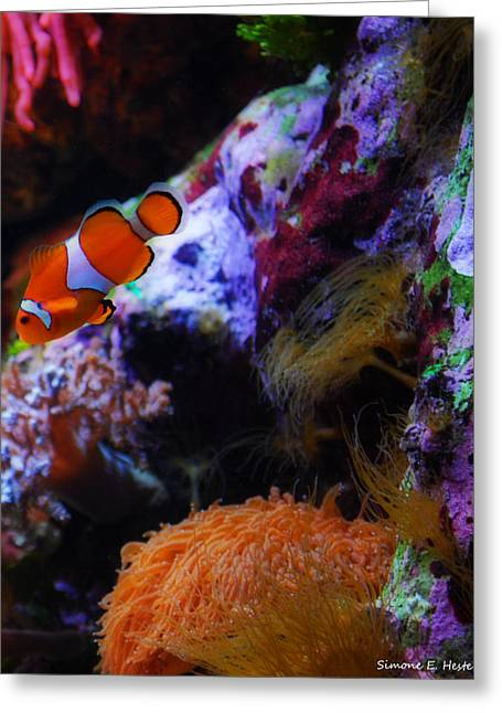 Clown Fish Photographs Greeting Cards - Nemo Greeting Card by Simone Hester