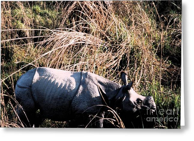 Rhinoceros Mixed Media Greeting Cards - Nepal Rhino in the Wild Greeting Card by First Star Art
