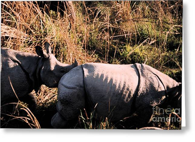 Rhinoceros Mixed Media Greeting Cards - Nepal Rhinos in the Wild Greeting Card by First Star Art