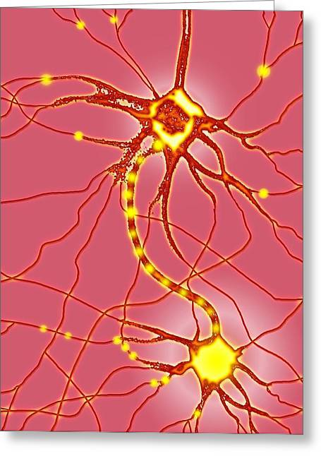 Relaying Greeting Cards - Nerve Cells, Artwork Greeting Card by Mehau Kulyk