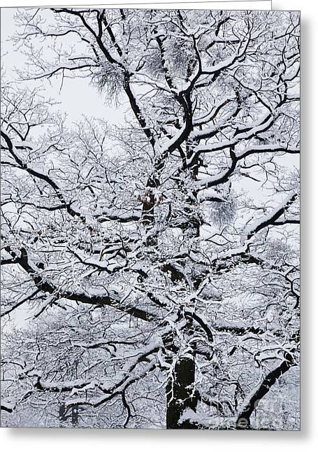 Snowy Day Greeting Cards - Nerves Greeting Card by Gabriela Insuratelu