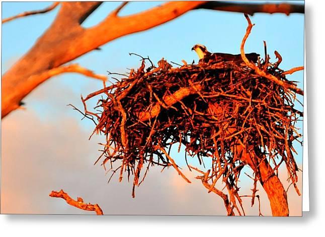 Nest Greeting Card by Barry R Jones Jr