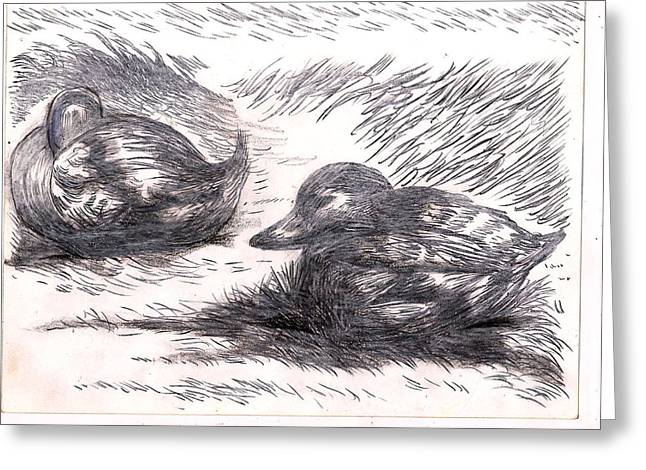 Nesting Mallards Greeting Card by Al Goldfarb