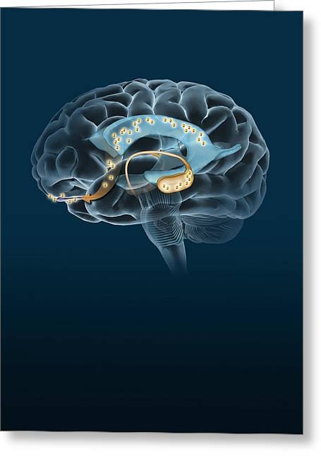 Ventricles Greeting Cards - Neurogenesis, Artwork Greeting Card by Henning Dalhoff