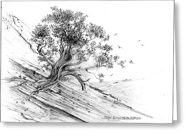 Jim Hubbard Greeting Cards - Nevada-Pinyon Pine Greeting Card by Jim Hubbard