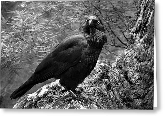 Crows Framed Prints Greeting Cards - Nevermore - Black and White Greeting Card by Michelle Wrighton