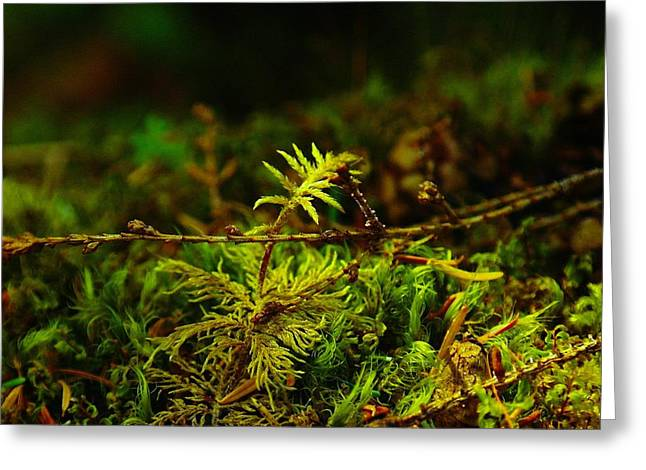 Moss Green Greeting Cards - New Beginning  Greeting Card by Jeff  Swan
