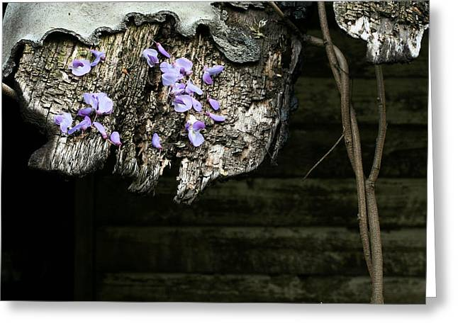 Fauquier County Virginia Greeting Cards - New Beginnings  Greeting Card by JC Findley
