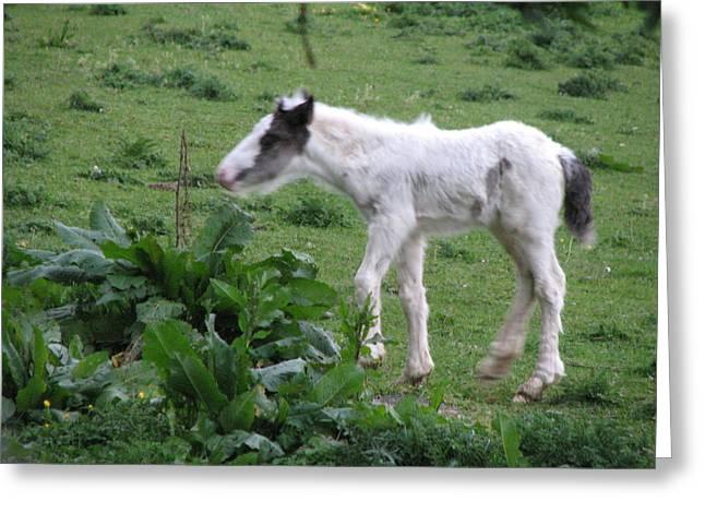 Irish Greeting Cards - New-born baby foal in the wild Irish countryside Greeting Card by Joseph Doyle