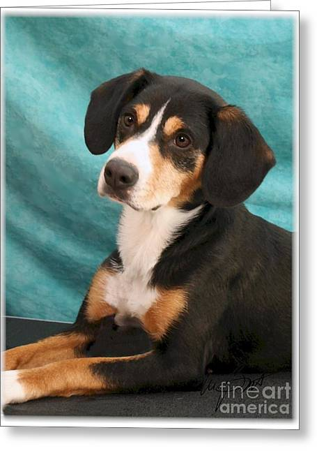 New Breed Entlebucher Pup Greeting Card by Maxine Bochnia