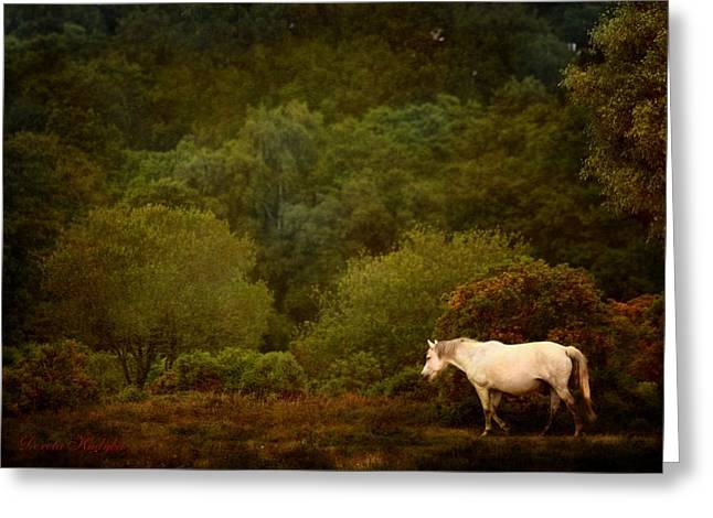 Gray Horse Greeting Cards - New Forest Walk Greeting Card by Dorota Kudyba