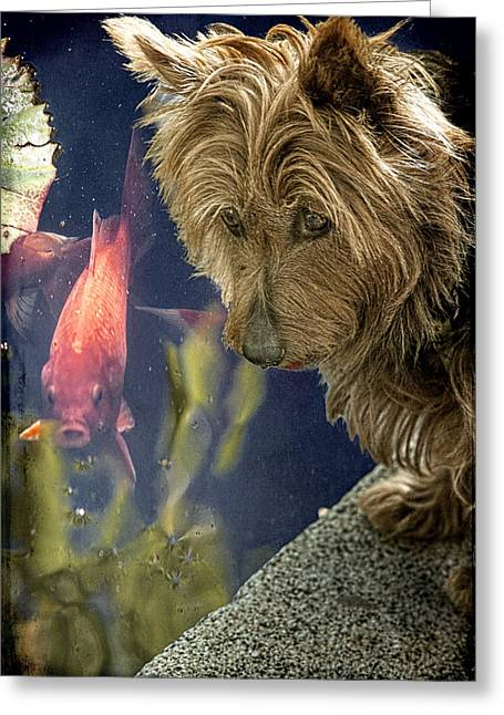 Scottie; Dog Greeting Cards - New Friends Greeting Card by Chris Lord