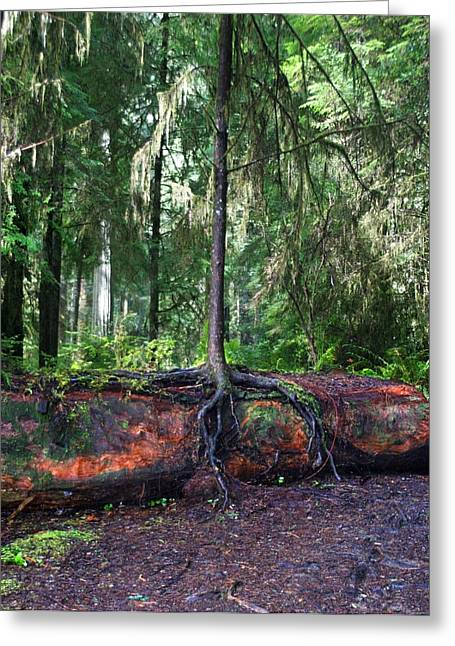 Tree Roots Photographs Greeting Cards - New Growth Greeting Card by Anthony Jones